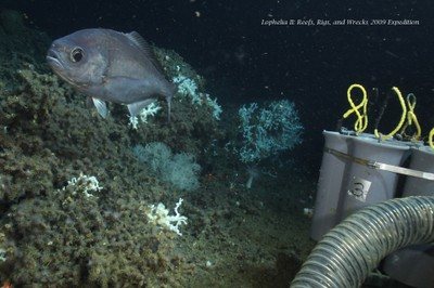 Lophelia & Barrelfish